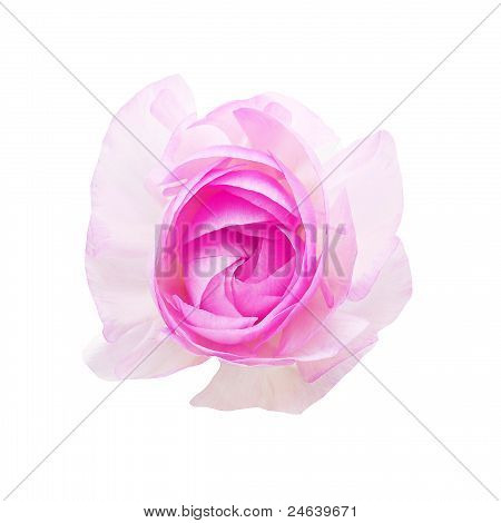 flower on white isolated background