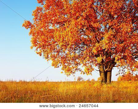 Hojas de encina otoño grande con rojo sobre un fondo de cielo azul