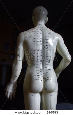 Acupuncture Model - Back