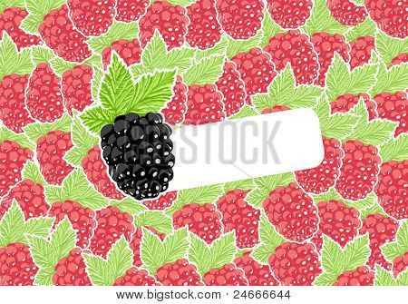 Vector blackberry with group of raspberries on background