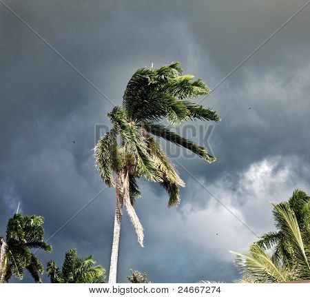 Palm whipped by the wind