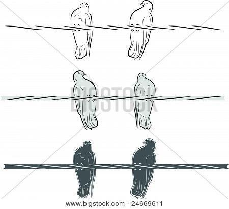 Pigeons Build