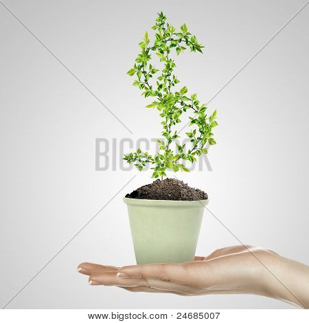 Hand holding green plant currency symbol