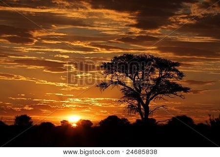 African Sunset With Silhouetted Tree