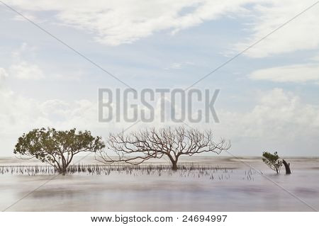 mangrove tree in sea with roots coming out of water long exposure makes sea and leaves blurred a death one next to a living