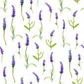 Botany Illustration Lavender Flowers In A Watercolor Style On White Background. Seamless Watercolor  poster