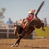 A Cowboy Rides A Bucking Horse In Saddle Bronc Event At A Country Rodeo poster