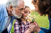 A Happy Small Girl With Her Senior Grandparents Smelling Flowers Outside. Sunset In Spring Nature. C poster