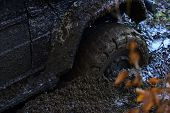 Offroad Tire Covered With Mud Overcomes Obstacles On Nature Background. Wheel In Deep Puddle Of Mud. poster