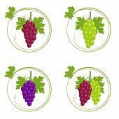 Bunches Of Grapes Set, Bunch Of Grapes With Leaves In Round Frame With Green Young Sprout Of Grapevi poster