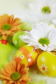 picture of easter eggs bunny  - Easter detail with Easter eggs or spring motive - JPG