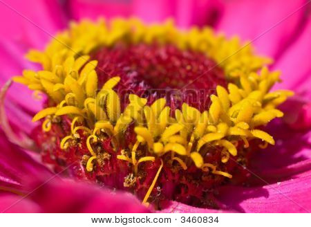 Yellow Pink Macro