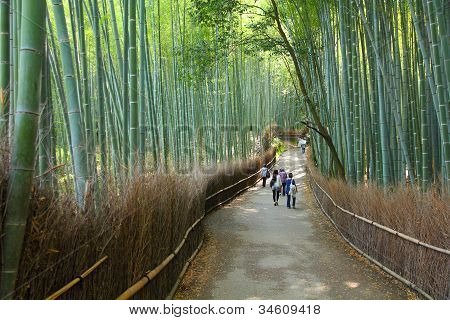 Bamboo Grove In Japan