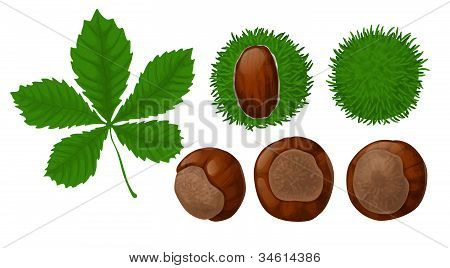 Chestnuts And Leaf