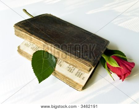 Rose In Book