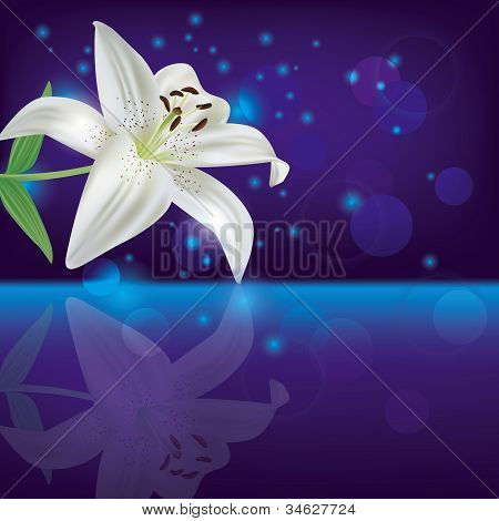 Lily Background, Invitation Or Greeting Card