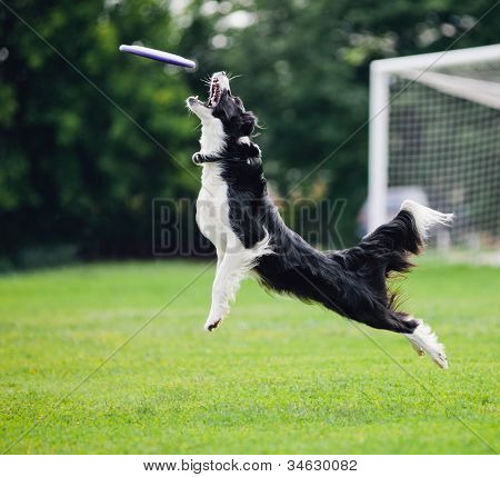 dog catching