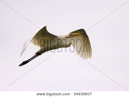 White Bird Flying