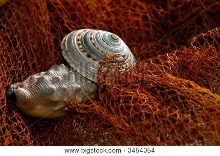 Shell With Fishing Net