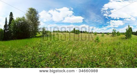 Panorama of a meadow with green grass and pine trees and blue cloudy sky