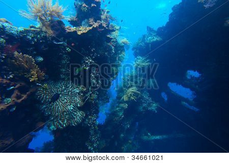 Underwater shoot of a shipwreck with corals and fishes