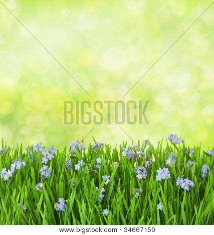 azul miosótis flores na relva verde com gotas de água no fundo desfocado