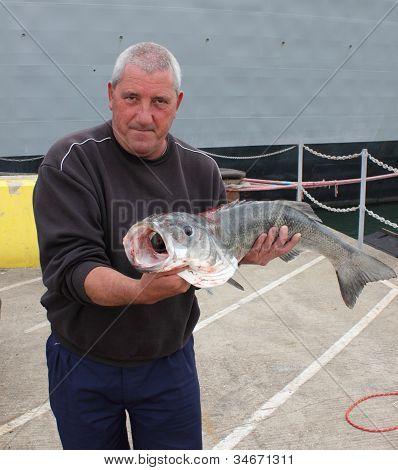 Large Seabass 13lb 2oz