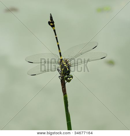 Close up of a dragonfly