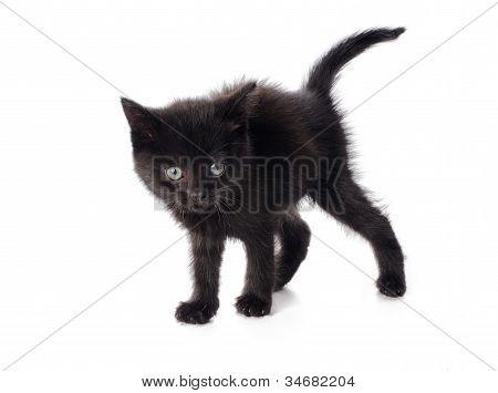 Scared Black Kitten