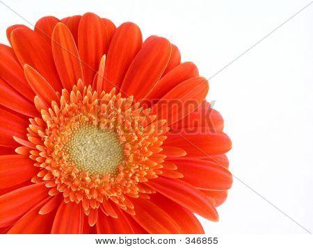 Pretty In Orange
