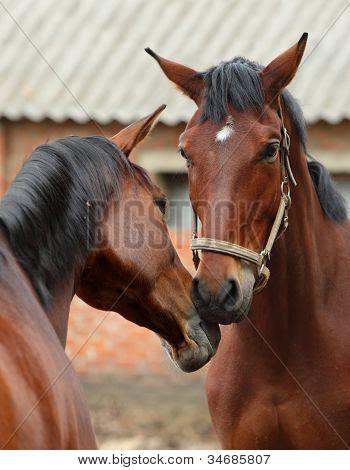 Horses love