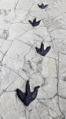image of paleontologist  - Detail of dinosaur tracks in Spain - JPG
