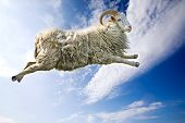 image of counting sheep  - A flying sheep through a beautiful blue sky - JPG