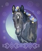 Funny Black Foal, Vector Colorful Realistic Illustration. Portrait Of  Little Horse With Flowers In  poster