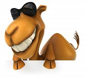 stock photo of camel  - Fun camel - JPG