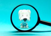 A Small Dog Puppy Looks Through A Magnifying Glass On A Blue Background. A Curious Puppy. Interest.  poster