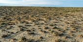 image of semi-arid  - Panorama of dry barren terrain with scrubby vegetation in an arid semi - JPG