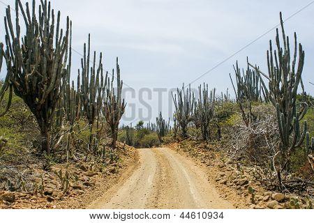 Sand-Straße auf einer Karibik-Insel