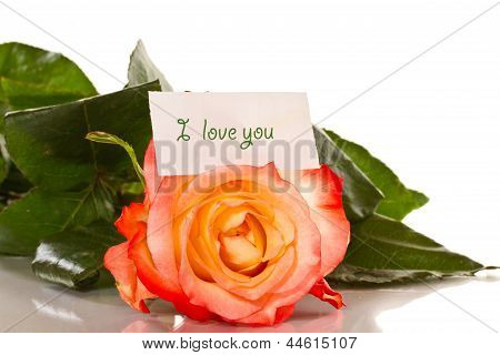 Declaration Of Love With Roses