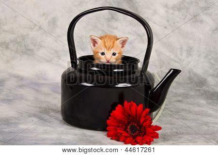 Kitten In Black Kettle