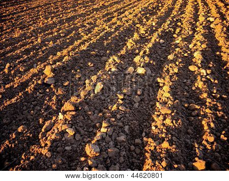 Plow Land Ready For Cultivation