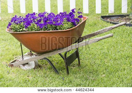 Purple petunias in Wheelbarrow