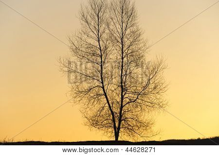 Silhouette Of A Single Tree.