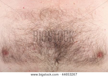 Mans Hairy Chest With Nipples