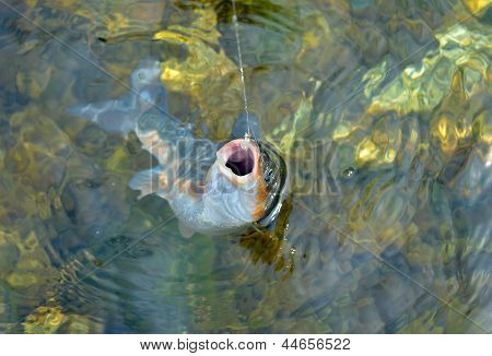 Fish On Hook