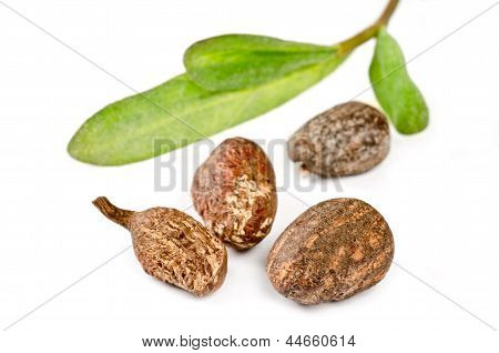 Shea fruits with leaves