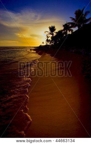Sunrise River   Palm