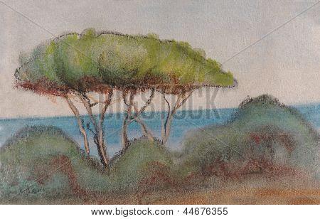 Pines On Seacoast