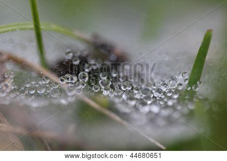 Ein Wassertropfen auf Spinnweben am Morgen