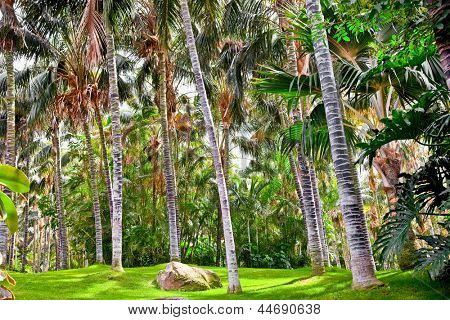 Tropical palm garden in beautiful paradise , Tenerife